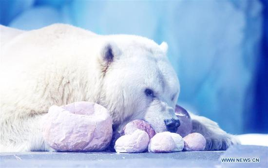 Polar bears celebrate Chinese Lantern Festival by enjoying 'sweet dumplings' in Shanghai