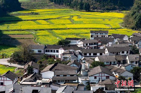 Guizhou rapeseed flowers in full bloom