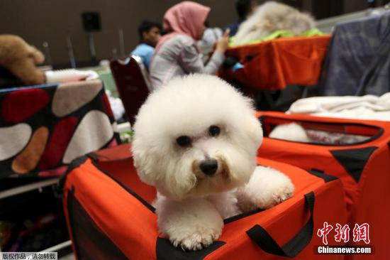 Pet hotels see booming business during Spring Festival holiday
