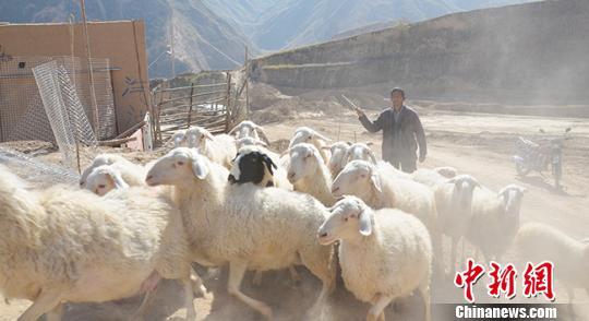 Dutch couple helps Qinghai herders shake off poverty