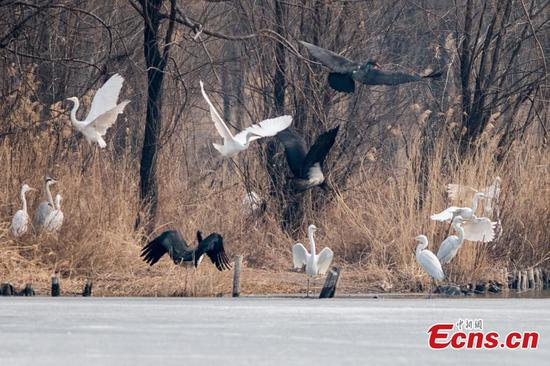 Endangered birds found in Taiyuan park
