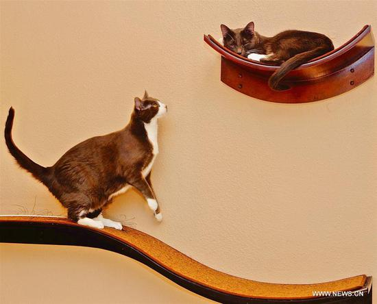 Customers spend time at Catopia Cat Cafe in Albuquerque, U.S.