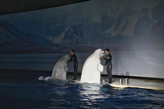 Beloved Shanghai whales to embark on 9,000km journey to new home