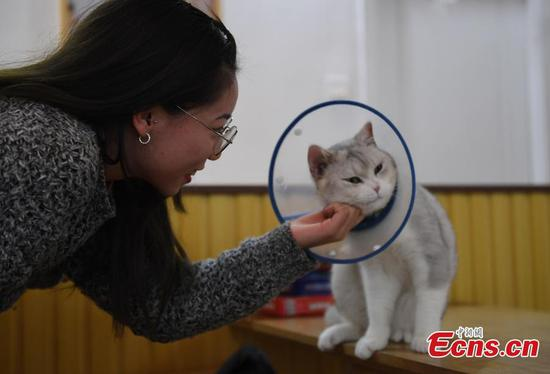 Store attracts cat lovers in Hangzhou