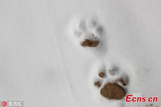 祁连山自然保护区发现更多野生动物