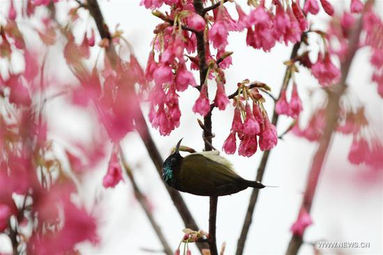 Birds resting on flowering trees across China