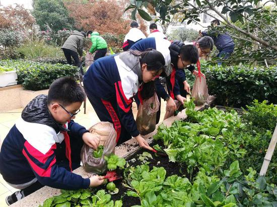 Students who live in the Caojiadu neighborhood collect vegetables on their rooftop garden, December 21, 2018. (Photo provided to chinadaily)