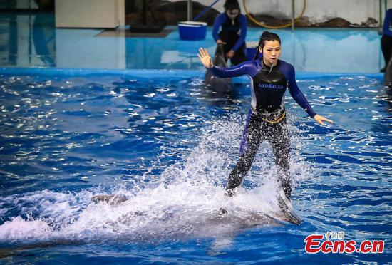 Dolphin trainer says she has a dream job