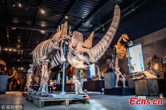 Ice Age mammoths up for auction at Summers Place