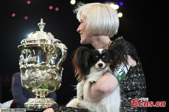 'Dylan the villain' wins UK's Crufts dog show