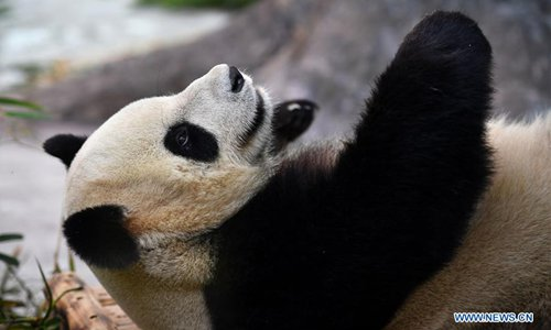 Northwest China's Gansu to build giant panda national park