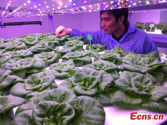 Artificial lighting for indoor growing systems