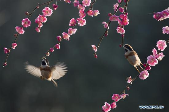 Scenery of flowering trees across China