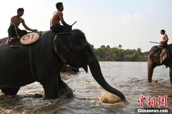 Vietnam's elephant race draws cheers, and critics
