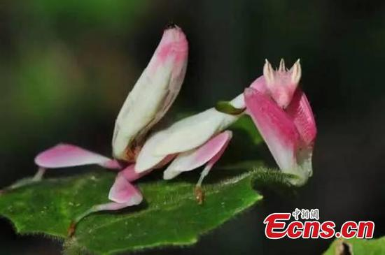 Insects are masters of disguise in Yunnan park
