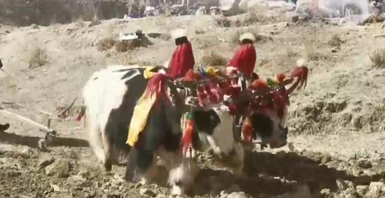 Tibetans celebrate Spring Sowing Festival
