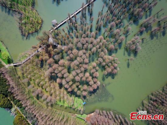 Shanghai's suburban wetland park in spring charm