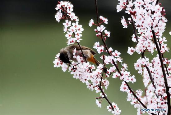 鸟,花在春天见过