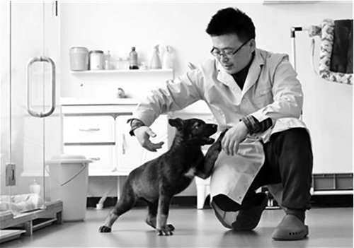 Two-month-old Kunxun, China's first cloned police dog, plays with an employee from the scientific lab. (Photo/Courtesy of Science and Technology Daily)