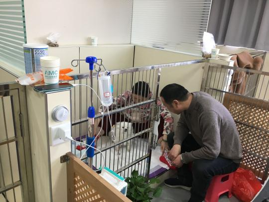 Animal hospital allows owners to stay overnight
