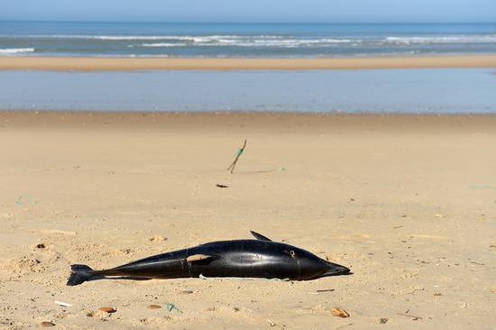 Another dolphin found dead on the French Atlantic coast