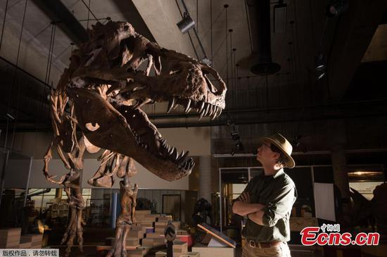 Paleontologists report world's biggest Tyrannosaurus rex Scotty