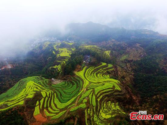 Pastoral beauty in Wuyuan County
