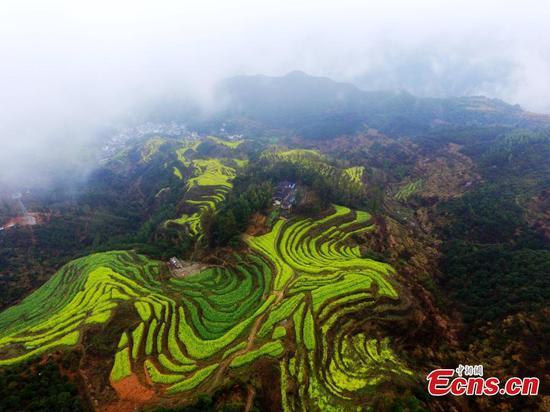 Wu源县的田园风光