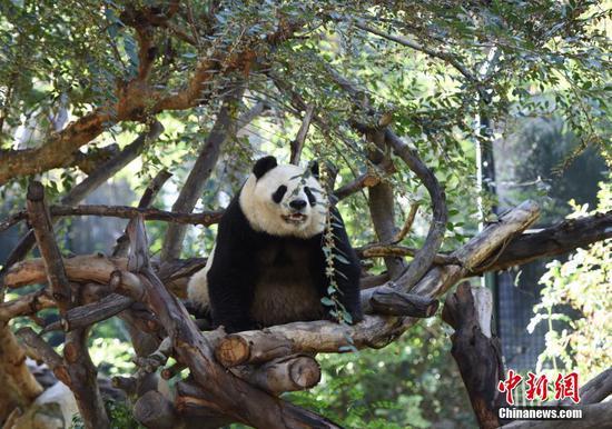 San Diego Zoo bids fond farewell to giant pandas