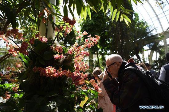在纽约举行的兰花展