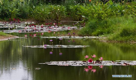 海南博ao的春天风景