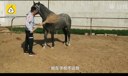 University student cures homesickness with horses from home