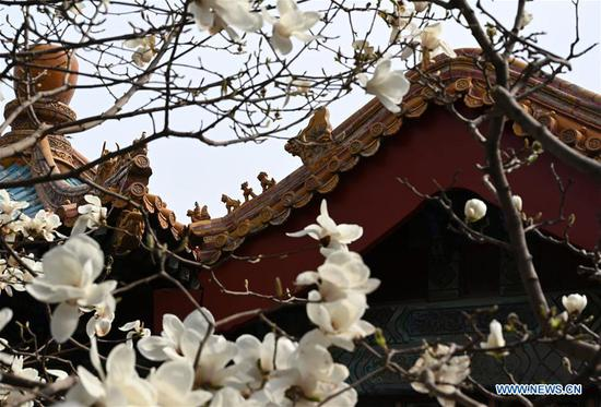 Flowers bloom in Palace Museum in Beijing, China