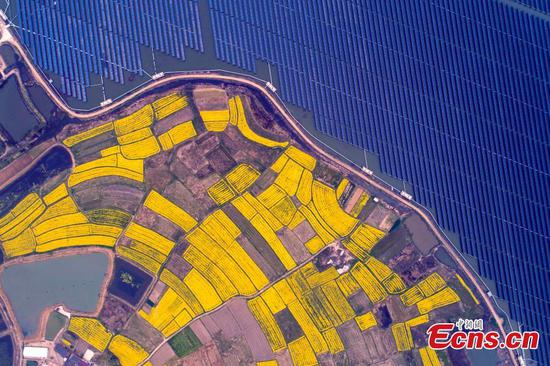 Flowers, solar panels create amazing landscape in Anhui