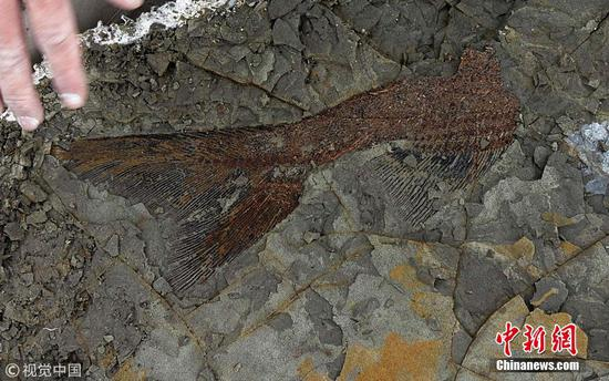 66m-year-old deathbed linked to dinosaur-killing meteor