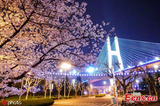 Shanghai bus stop transformed by cherry blossoms