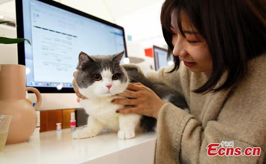Shanghai firm offers Pet Day to reduce work stress
