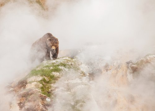 BBC Studios brings its latest nature documentary 'One Planet' to China