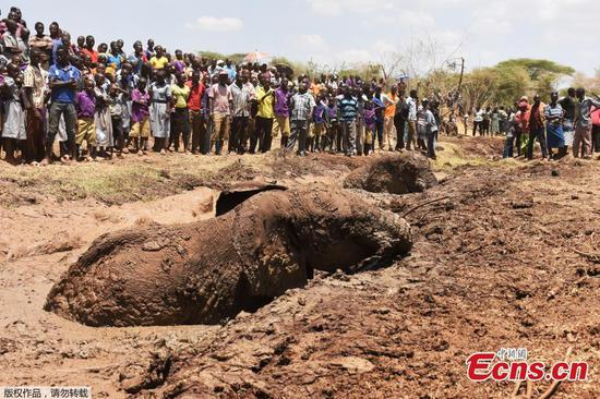 Three elephants rescued from deep mud in Kenya