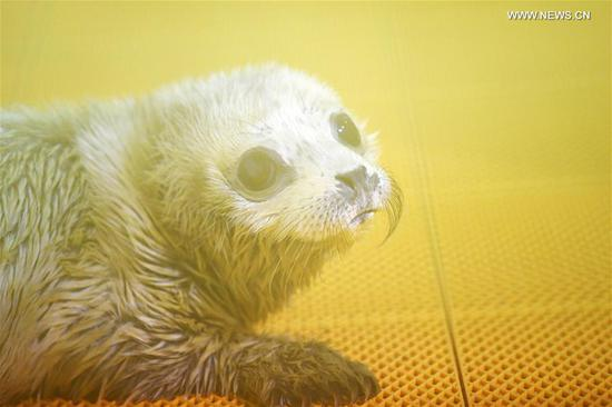 New-born seal pup makes debut at Harbin Polarland