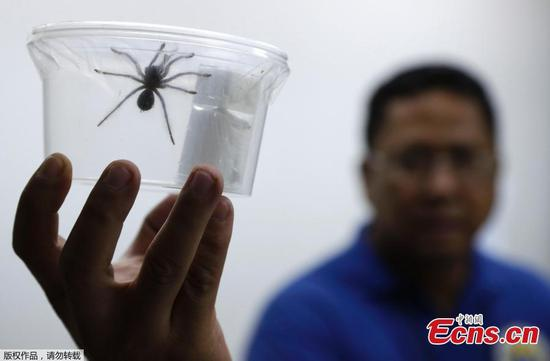 Philippine Customs seize 757 live venomous spiders from Poland