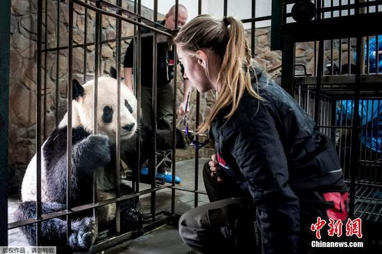 Pandas to fly to Danish zoo