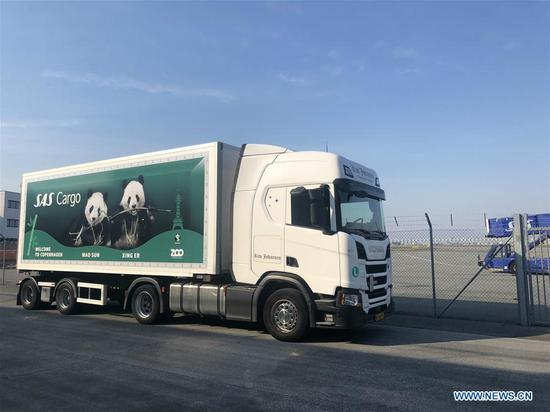 Giant pandas from China arrive in Copenhagen for collaborative research