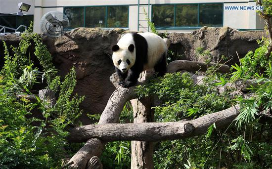 San Diego Zoo holds farewell party for giant pandas