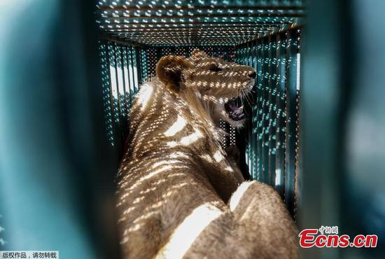 Animals evacuated from warn-torn Gaza zoo