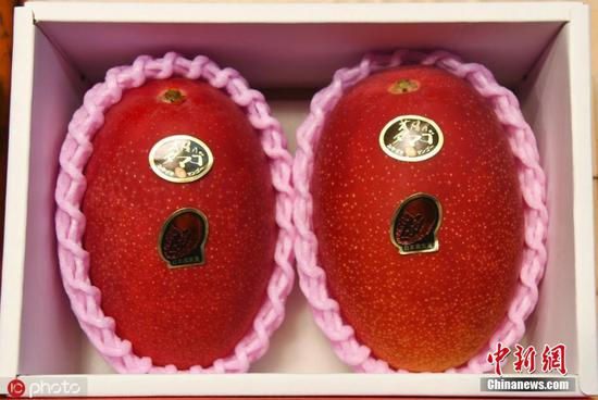 Pair of mangoes goes for record $4,488 yen at season's first auction