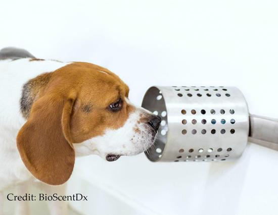 Dogs can smell out cancer in blood, offering new cancer-screening way