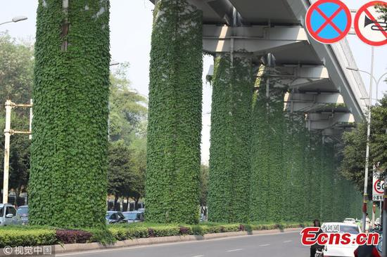 Climbing plants cover subway pillars in Chongqing