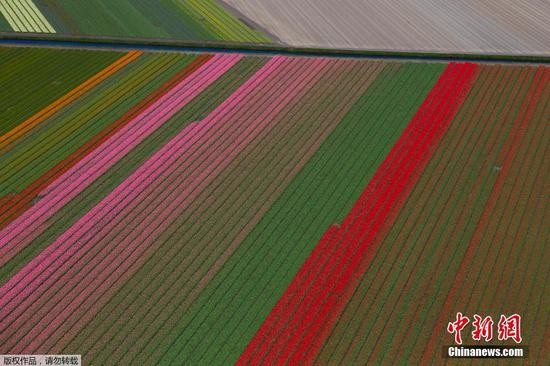 Stunning view of flower fields in Lisse, Netherlands