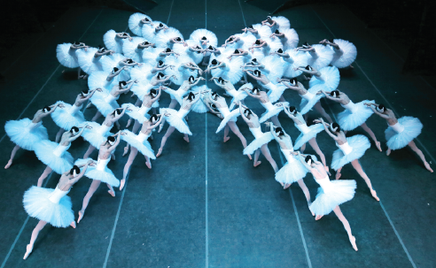 Shanghai Ballet's Swan Lake, featuring the world's largest ensemble of 48 performers dressed as swans, will be staged at New York's Lincoln Center in January 2020. (Photo provided to China Daily)